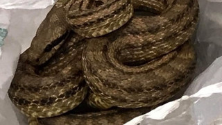 Θεσσαλονίκη: Φίδι προκάλεσε πανικό σε εστιατόριο