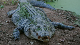 Τραγικός θάνατος ψαρά: Κροκόδειλος κατασπάραξε τα γεννητικά του όργανα