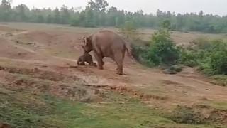 Ελέφαντας ποδοπάτησε και σκότωσε άνδρα για να προστατέψει το μωρό της (pics&vid)