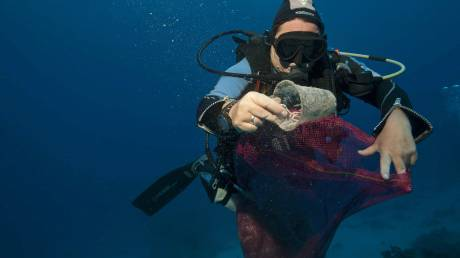 Το πλαστικό σκοτώνει τη θαλάσσια ζωή: Τα πέντε πιο ευάλωτα είδη