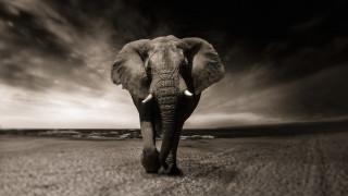 Οι επιστήμονες προειδοποιούν για τον θανάσιμο κίνδυνο που διατρέχουν τα μεγάλα ζώα