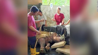 Μαλαισία: Πέθανε ο τελευταίος αρσενικός ρινόκερος της Σουμάτρας