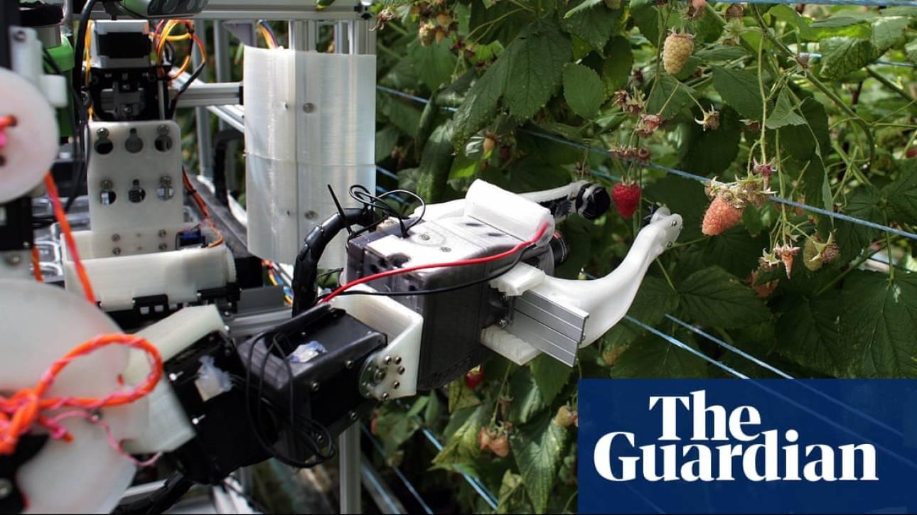 Βρετανία: Πώς ένα ρομπότ θα σώσει τους καλλιεργητές σμέουρων