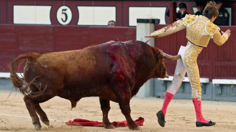 Ταύρος πήρε την εκδίκησή του και κάρφωσε ταυρομάχο στα οπίσθια