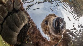 Βραβευμένα «κλικ»: Το μεγαλείο της φύσης μέσα σε 7 φωτογραφίες