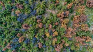Έντομο – φονιάς αποδεκατίζει το δάσος Σέιχ Σου