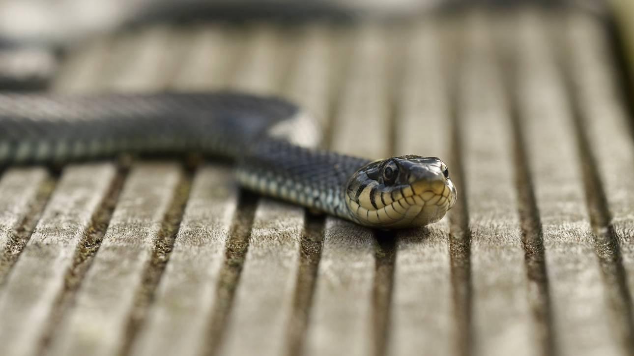 Δημόσια υπάλληλος υποστήριξε πως ένα φίδι... έφαγε 100.000 ευρώ - Δεν έπεισε κανέναν