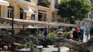 Μεγάλη αναστάτωση στη Θεσσαλονίκη από πτώση δέντρου στο κέντρο
