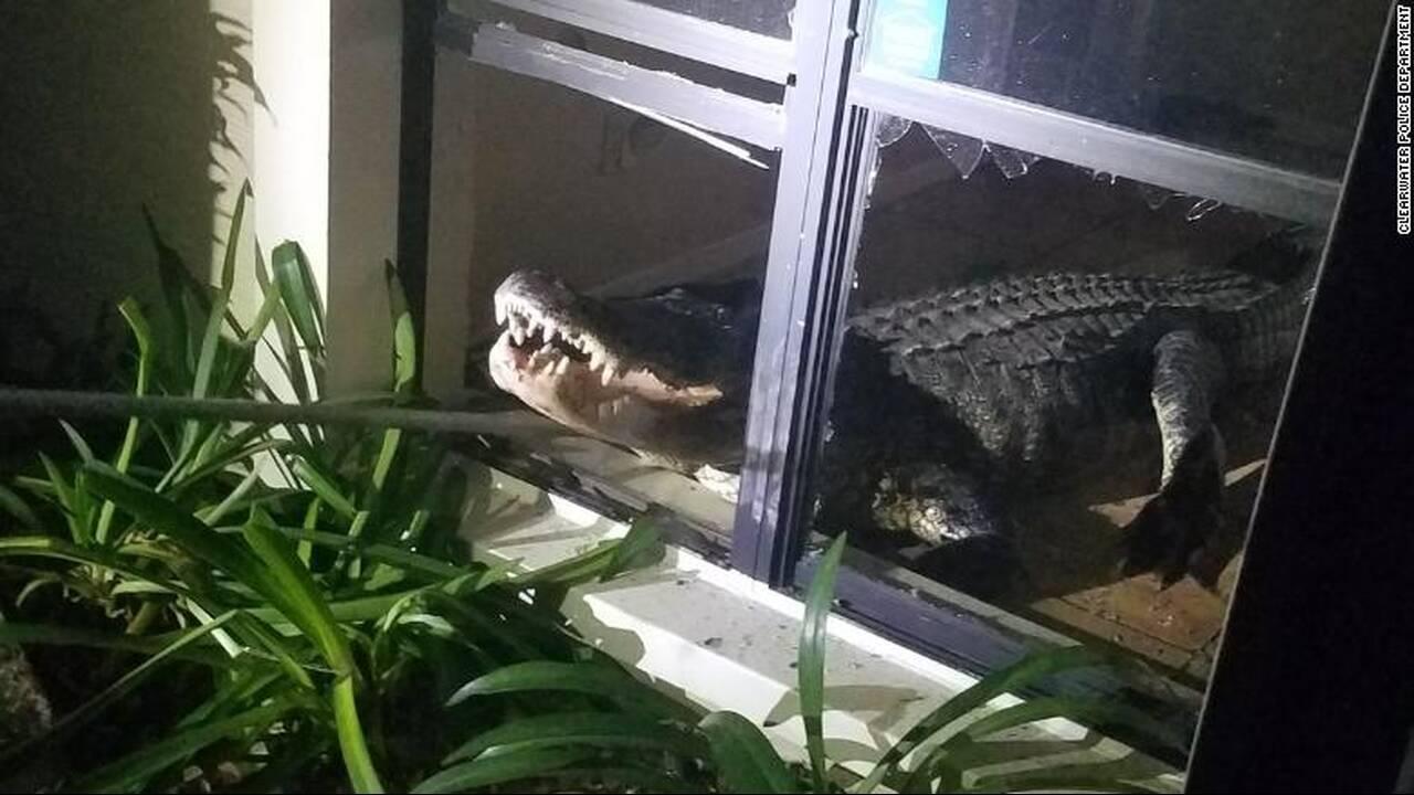 https://cdn.cnngreece.gr/media/news/2019/06/01/179001/photos/snapshot/aligator-2.jpg
