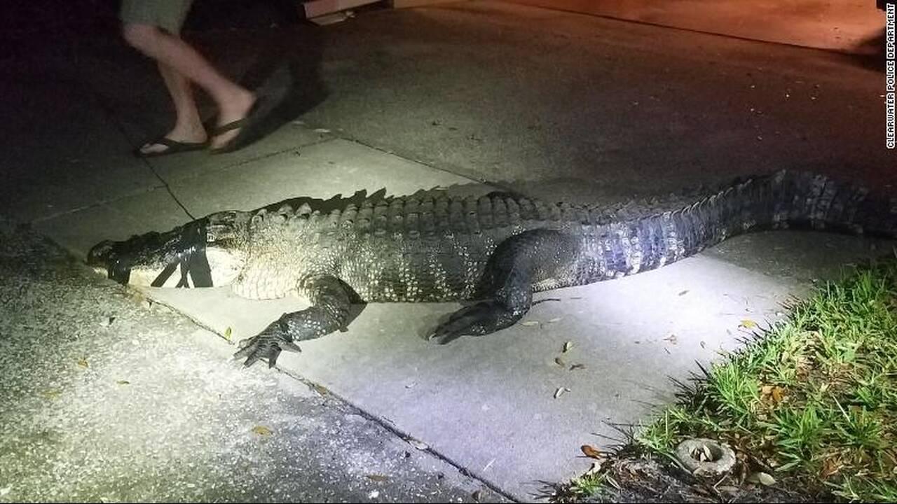 https://cdn.cnngreece.gr/media/news/2019/06/01/179001/photos/snapshot/aligator-3.jpg