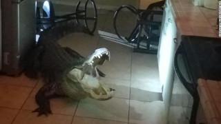 Απρόσμενος επισκέπτης: Βρήκε έναν πελώριο... αλιγάτορα στην κουζίνα της