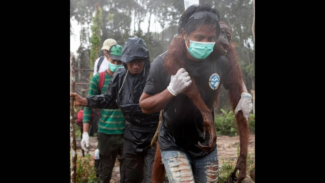 https://cdn.cnngreece.gr/media/news/2019/06/02/179049/photos/snapshot/PEOPLE-ONLY-Orangutan-Boon-Mee-2.jpg