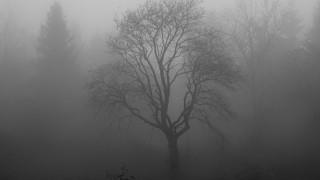 Ολλανδία: Ξεριζωμένο από καταιγίδα δέντρο, αποκάλυψε ένα από τα μεγαλύτερα εργαστήρια κοκαΐνης