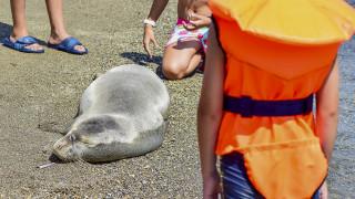 Κτηνωδία στην Κρήτη: Σκότωσαν φώκια περνώντας σχοινί με πέτρες στο λαιμό της