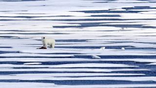 Το CNNi στον Αρκτικό Κύκλο: Το λιώσιμο των πάγων και οι δυσοίωνες εκτιμήσεις των επιστημόνων