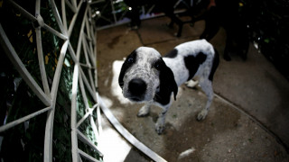 «ΦιλόΔημος ΙΙ»: Είκοσι εκατ. ευρώ στους δήμους για καταφύγια αδέσποτων ζώων