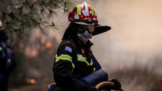 Βοιωτία: Φωτιά ξέσπασε σε ελαιώνα – Επεκτείνεται προς το βουνό