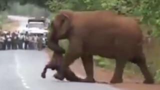 Ελέφαντες «κηδεύουν» μικρό ελεφαντάκι και το βίντεο συγκινεί τον πλανήτη