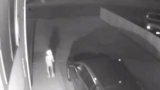 Βίντεο κατέγραψε μυστηριώδες πλάσμα βγαλμένο από το «Χάρι Πότερ»
