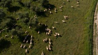 Φθιώτιδα: Νεκρό ολόκληρο κοπάδι πρόβατα – «Έσκασαν» από το φαΐ