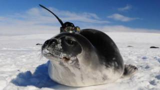 Πώς οι φώκιες βοήθησαν τους επιστήμονες να λύσουν ένα μυστήριο της Ανταρκτικής