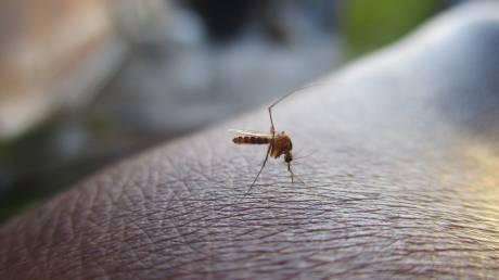 Έτσι δεν θα σας τσιμπάνε τα κουνούπια