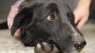 Στα μάτια των σκύλων δύσκολο να αντισταθεί κανείς – Και γι'αυτό υπάρχει λόγος