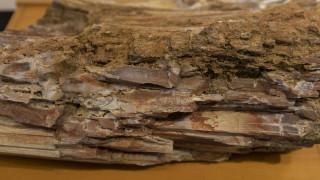 Μυτιλήνη: Τουρίστες έκρυβαν στις βαλίτσες τους απολιθώματα από το Απολιθωμένο Δάσος