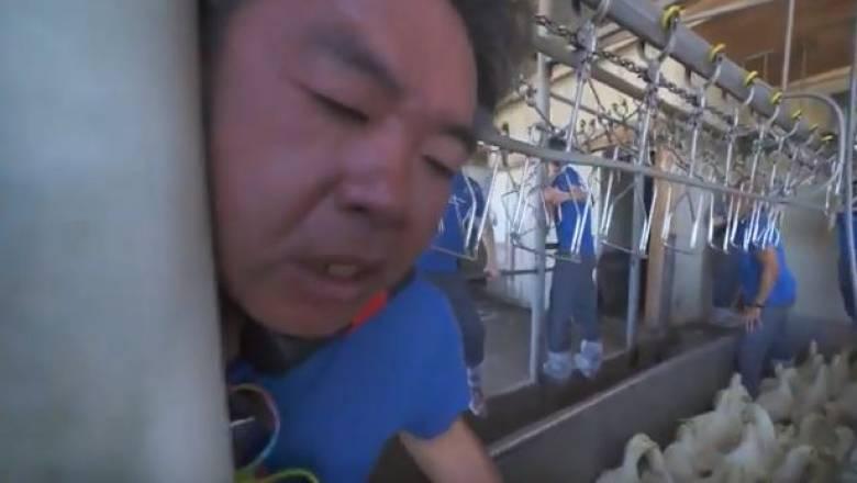 Σκληρές εικόνες: Ακτιβιστής αλυσοδέθηκε σε σφαγείο και παραλίγο να αποκεφαλιστεί