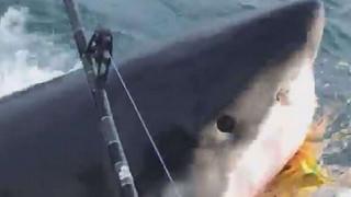 Κάτι από... Σαγόνια του Καρχαρία είχε η ψαριά πέντε ανδρών ανοιχτά του Νιου Τζέρσεϊ