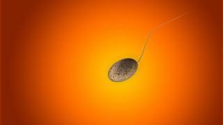 Έρευνα: Το κατεψυγμένο σπέρμα διατηρεί τη ζωτικότητά του στο διάστημα