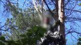 Η στιγμή που οι διασώστες εντοπίζουν τον πιλότο του Eurofighter πάνω στην κορυφή ενός δέντρου