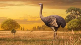 Ανακάλυψη: Οι πρώτοι Ευρωπαίοι ζούσαν δίπλα σε τεράστια πουλιά