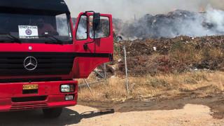 Φωτιά σε δάσος στην Ηλεία