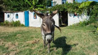 Βόλος: Χτυπούσε γάιδαρο στο κεφάλι γιατί τον… μάτιασαν! Τιμωρήθηκε με φυλακή και πρόστιμο