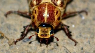 Ο απόλυτος εφιάλτης: Σύντομα οι κατσαρίδες θα είναι δύσκολο να εξολοθρευτούν