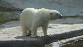 Ρωσία: Γλίτωσε επίθεση από πολική αρκούδα χάρη σε μία… σκούπα
