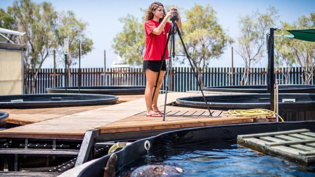 Ένα ευρωπαϊκό «δίχτυ» ασφαλείας για τις θαλάσσιες χελώνες