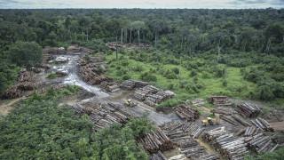 Βραζιλία: Τρομακτική αύξηση του ρυθμού εκδάσωσης του Αμαζονίου υπό τον Μπολσονάρου