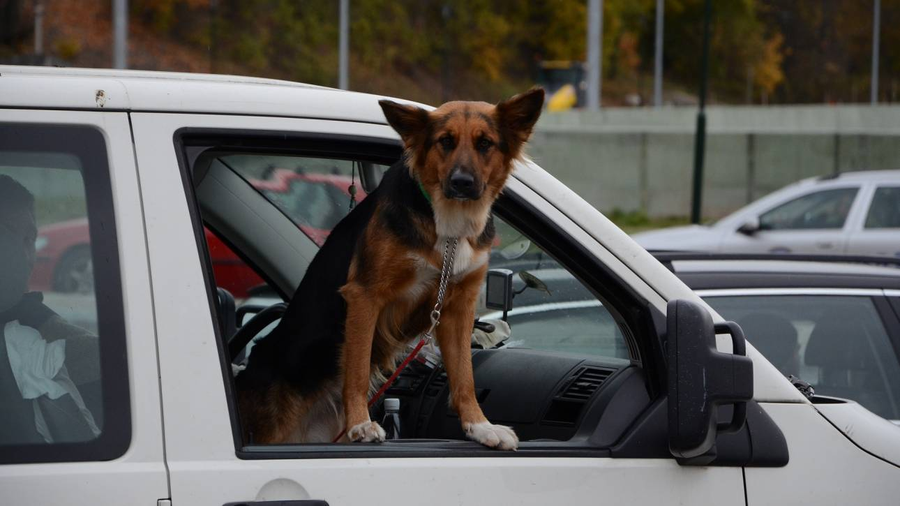 Βόλος: Σκύλος πέθανε από τη ζέστη μέσα στο κλειδωμένο αυτοκίνητο του ιδιοκτήτη του