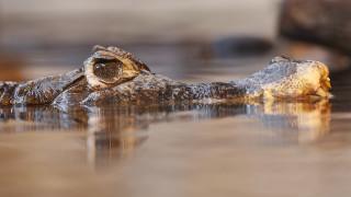 Φλόριντα: Το χέρι και το πόδι ενός 45χρονου βρέθηκαν στο στομάχι αλιγάτορα