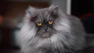 Juno: Γνωρίστε τον πιο στριφνό γάτο του Instagram