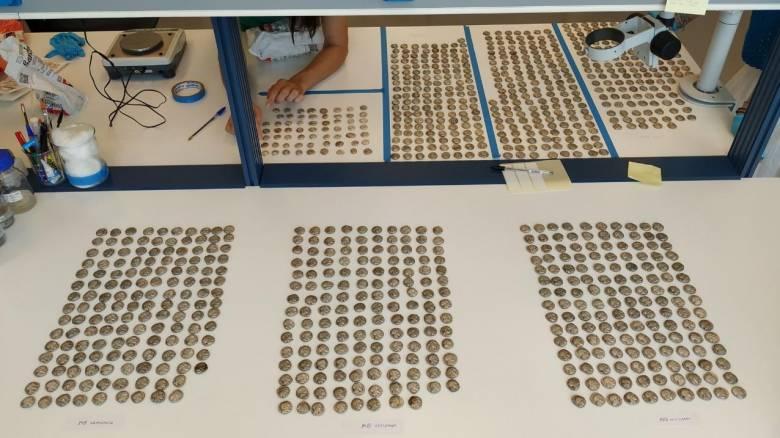 Αρχαιολογικό θησαυρό εντόπισαν υπάλληλοι του Τελωνείου Κήπων