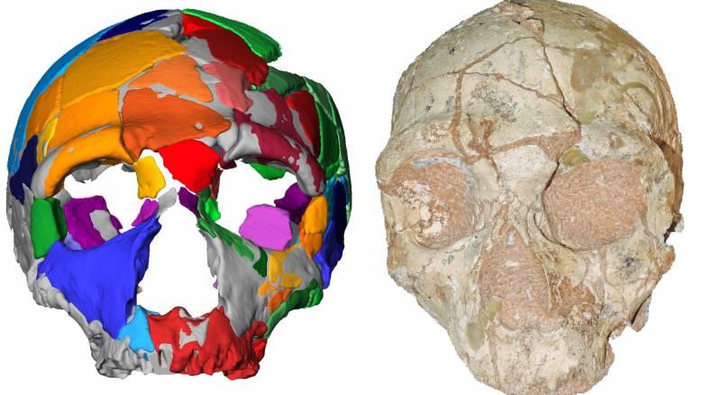 Κρανίο 210.000 ετών από την Ελλάδα, το αρχαιότερο δείγμα σύγχρονου ανθρώπου στην Ευρασία