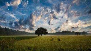 Ένα τρισεκατομμύριο δέντρα στην υπηρεσία της Γης: Πώς θα επιδράσουν στην κλιματική αλλαγή