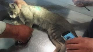 Λαμία: Διευθυντής λυκείου πυροβόλησε εν ψυχρώ γάτα και την άφησε παράλυτη