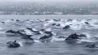 Εντυπωσιακό βίντεο: Ο μαγικός «χορός» των δελφινιών στα νερά της Καλιφόρνια