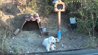 Ο... Χάτσικο της Ελλάδας: Σκύλος περιμένει το νεκρό αφεντικό του σχεδόν 2 χρόνια
