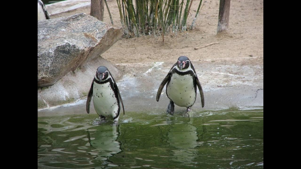 https://cdn.cnngreece.gr/media/news/2019/07/17/184670/photos/snapshot/penguin-2505_640.jpg