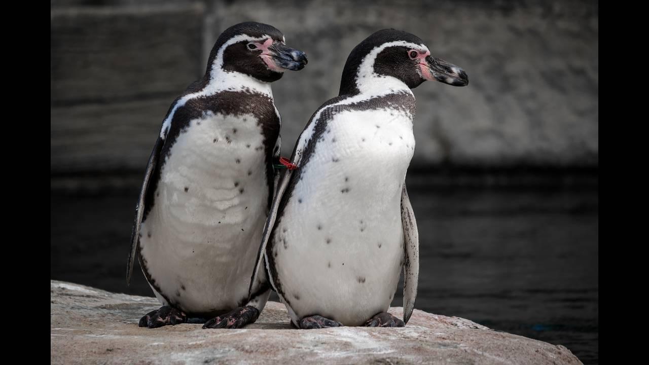 https://cdn.cnngreece.gr/media/news/2019/07/17/184670/photos/snapshot/penguin-2910470_1920.jpg